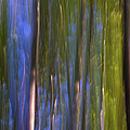 Forest Dreams by Guido Montanes Castillo