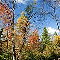 Forest Edge Autumn Pocono Mountains Pennsylvania by A Gurmankin