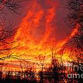 Forest Fire by Joe Geraci