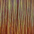 Forest Fire by Nigel Jones