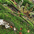 Forest Floor Fungi And Moss by Gill Billington
