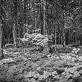 Forest Floor Glacier National Park Bw by Rich Franco