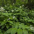 Forest Flowers by Debra and Dave Vanderlaan