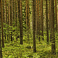 Forest For The Trees by Nancy De Flon