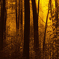 Forest Glow by Jim Vance
