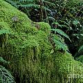 Forest Greenery by Darleen Stry