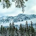 Forest Guardian by Aaron Aldrich