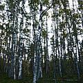 Forest II by Kukka Lehto