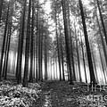 Forest In The Mist by Michal Boubin