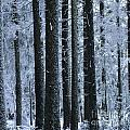 Forest In Winter by Bernard Jaubert