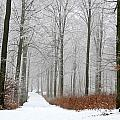 Forest In Winter by Jean Schweitzer