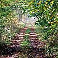 Forest Invitation by Christian Mattison