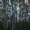 Forest by Kukka Lehto