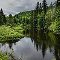 Forest Lake - Quebec - Canada by Georgia Mizuleva