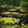 Forest Lake With Lily Pads by Elena Elisseeva