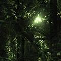 Forest Light by GJ Blackman