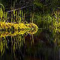 131005b-044 Forest Marsh 1 by Albert Seger