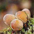 Forest Mushrooms by MSVRVisual Rawshutterbug