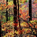 Color The Forest by Karen Wiles