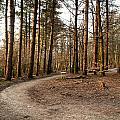 Forest Path by Ben Davis
