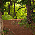 Forest Path by Brad Brizek