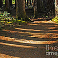 Forest Path by Connie Fox