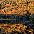 Forest Reflection by Jeff Folger