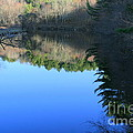 Forest Reflections  by Neal Eslinger