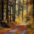 Forest Road by Ingrid Smith-Johnsen
