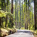 Forest Road by Tim Hester