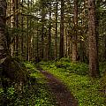 Forest Serenity Path by Mike Reid