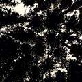 Forest Sky by Sherry Lynn Matthews