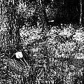 Forest Socket by Yevgeni Kacnelson