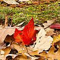 Forest Still Life 5 by Douglas Barnett