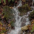 Forest Stream Cascade by Darleen Stry