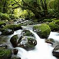 Forest Stream by Les Cunliffe
