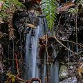 Forest Streamlet by Darleen Stry