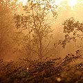 Forest Sunrise 2 by Scott Hovind