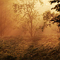 Forest Sunrise by Scott Hovind