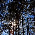 Forest Sunset by Carolyn Stagger Cokley