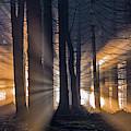 Forest by Tom Pavlasek