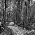 Forest Trail Bw by Ivan Slosar