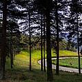 Forest Trail by Edgar Laureano