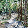Forest Trail by Marilyn  McNish