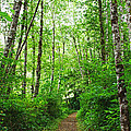 Forest Trail To Follow by Tom Janca