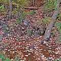 Forest Trickle by Susan Wyman