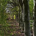 Forest Walk Hdr by Antony McAulay