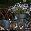 Forget-me-nots And Small Watering Can  by Luv Photography