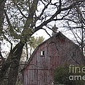 Forgotten Barn by Yumi Johnson