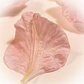 Forgotten Petals by Melissa Bittinger
